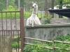6-mini-zoo