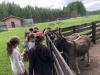 7-moni-zoo