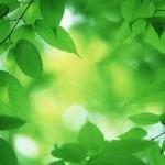 Par zaļu pat vēl zaļāks...