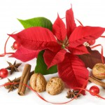 Christmas Sweet Flavors Decorations Fresh Cinnamon Poinsettia Merry Naturem Red Nuts Winter Centerpiece Green Forever Love Arrangement Background Pictures